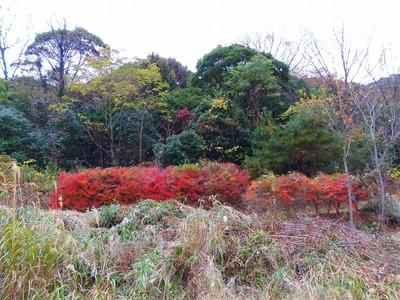 季節の色.jpg