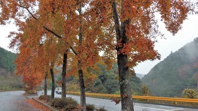 季節の色1.jpg