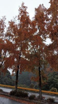 季節の色2.jpg