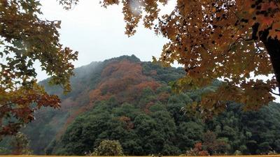 季節の色3.jpg