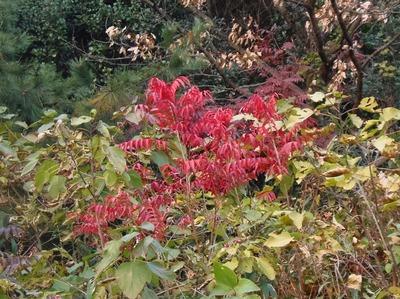 季節の色4.jpg