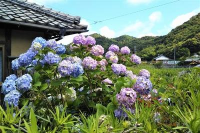季節の花1.jpg