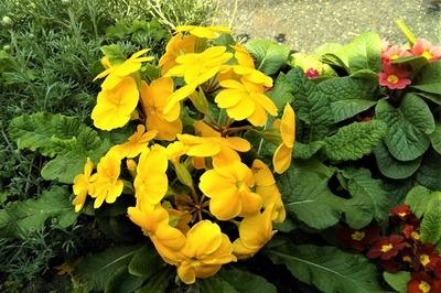 季節の花10.jpg