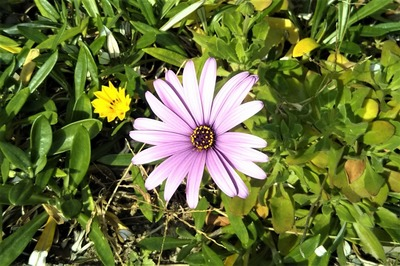 季節の花11.jpg