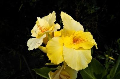 季節の花12.jpg
