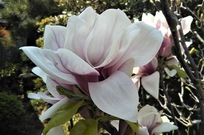 季節の花13.jpg