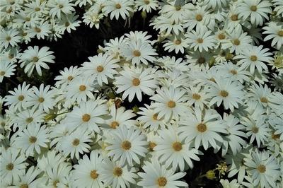 季節の花14.jpg