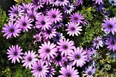 季節の花15.jpg