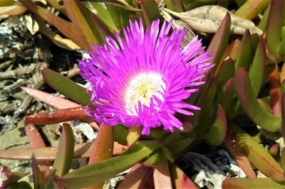 季節の花16.jpg