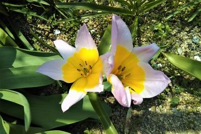 季節の花17.jpg