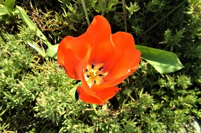季節の花19.jpg