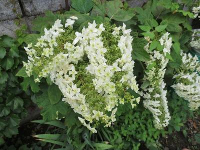 季節の花2.jpg