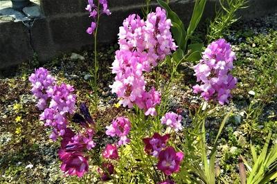 季節の花20.jpg
