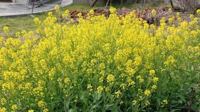 季節の花3.jpg