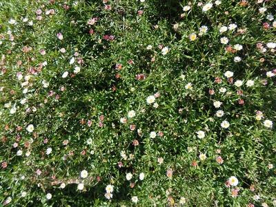季節の花4.jpg