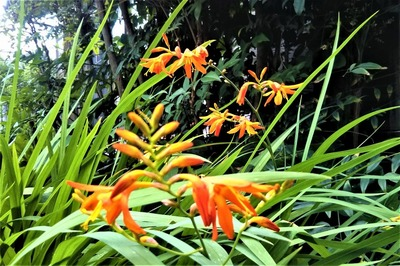 季節の花5.jpg