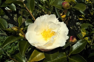 季節の花6.jpg