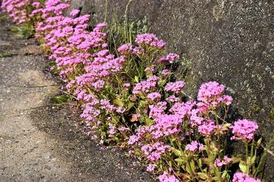 季節の花7.jpg
