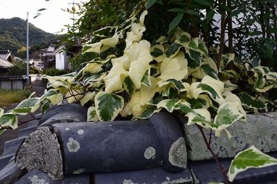 季節の花8.jpg