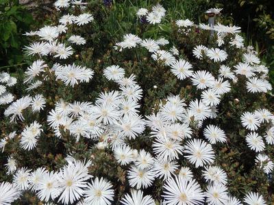季節の花9.jpg