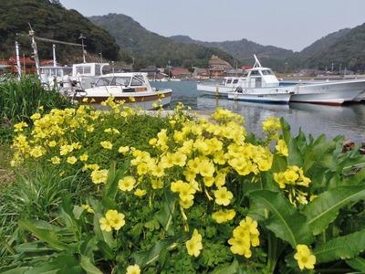季節の花と大泊港5.3.22.jpg
