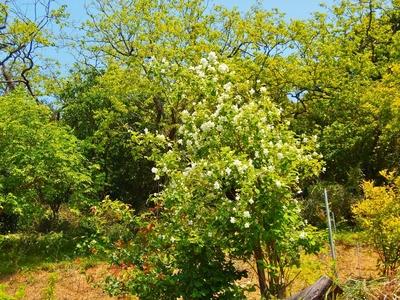 季節の花と新緑.jpg