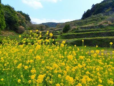 季節の花と棚田.jpg