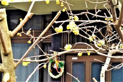 季節の花と正月飾り.jpg