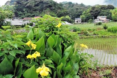 季節の花と水田.jpg