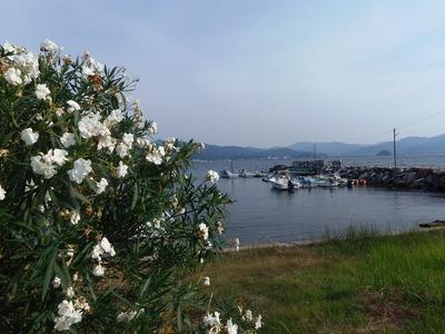 季節の花と江尻港1.jpg