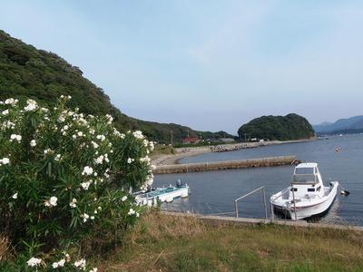 季節の花と江尻港2.jpg