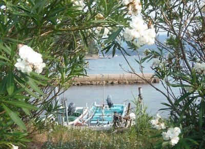 季節の花と江尻港3.jpg