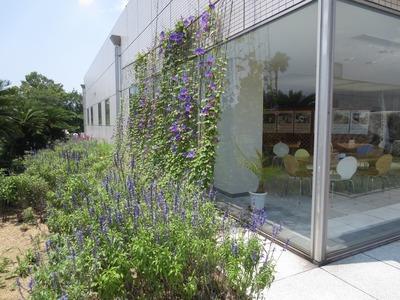 季節の花と湖水ホール2.jpg