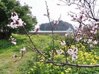 季節の花と王子山.jpg