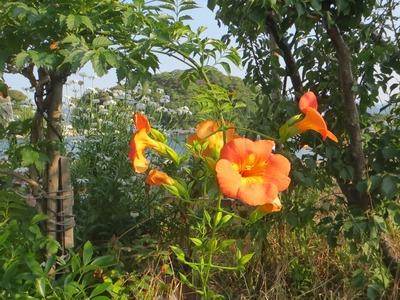 季節の花と王子山4.7.1.jpg