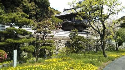 季節の花と西圓寺山門1.jpg