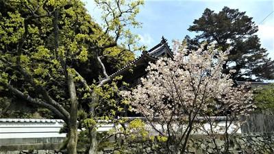 季節の花と西圓寺山門2.jpg