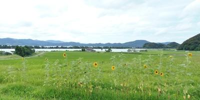 季節の花と青海棚田と波の橋立.JPG