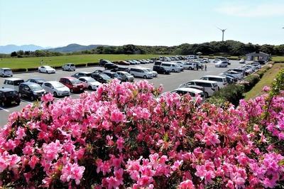 季節の花と駐車場.jpg