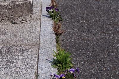 季節の花の自然力.jpg