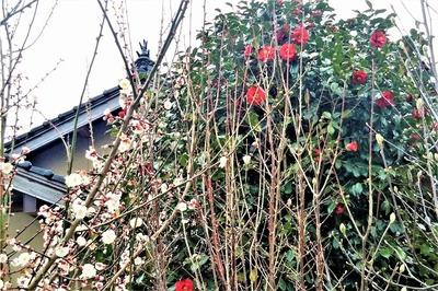 季節の花コラボ.jpg