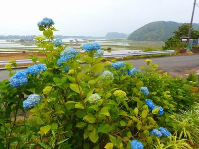 季節の花・棚田・波の橋立2.jpg