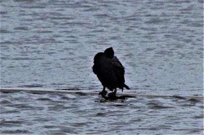 孤独な野鳥.jpg