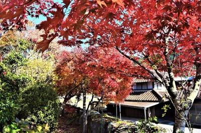 安藤庭園11.jpg