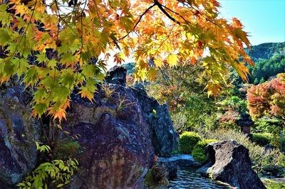 安藤庭園12.jpg