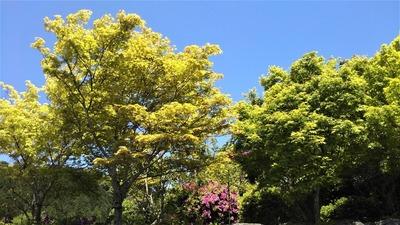 安藤庭園2.jpg
