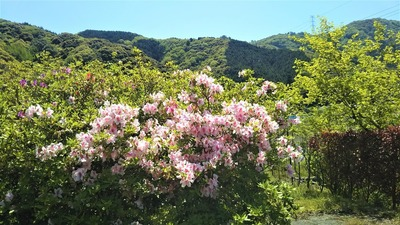 安藤庭園4.jpg