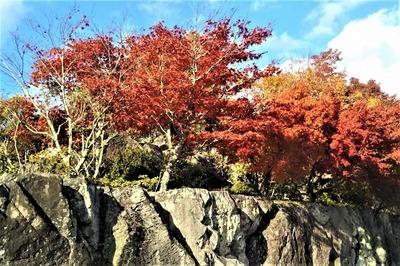 安藤庭園5.jpg