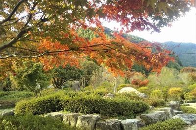 安藤庭園6.jpg