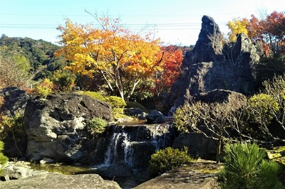 安藤庭園9.jpg